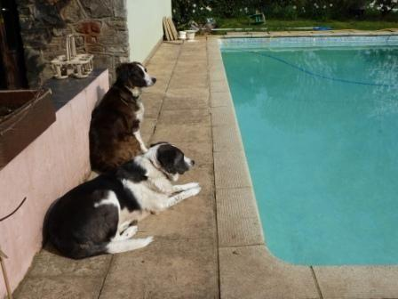 Rosie and Misty sitting by the pool
